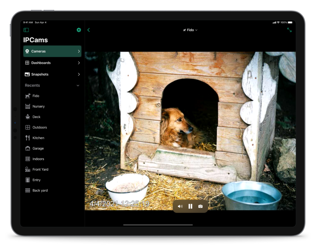 Screenshot of IPCams app in action showing a security camera stream of a dog in a dog house.